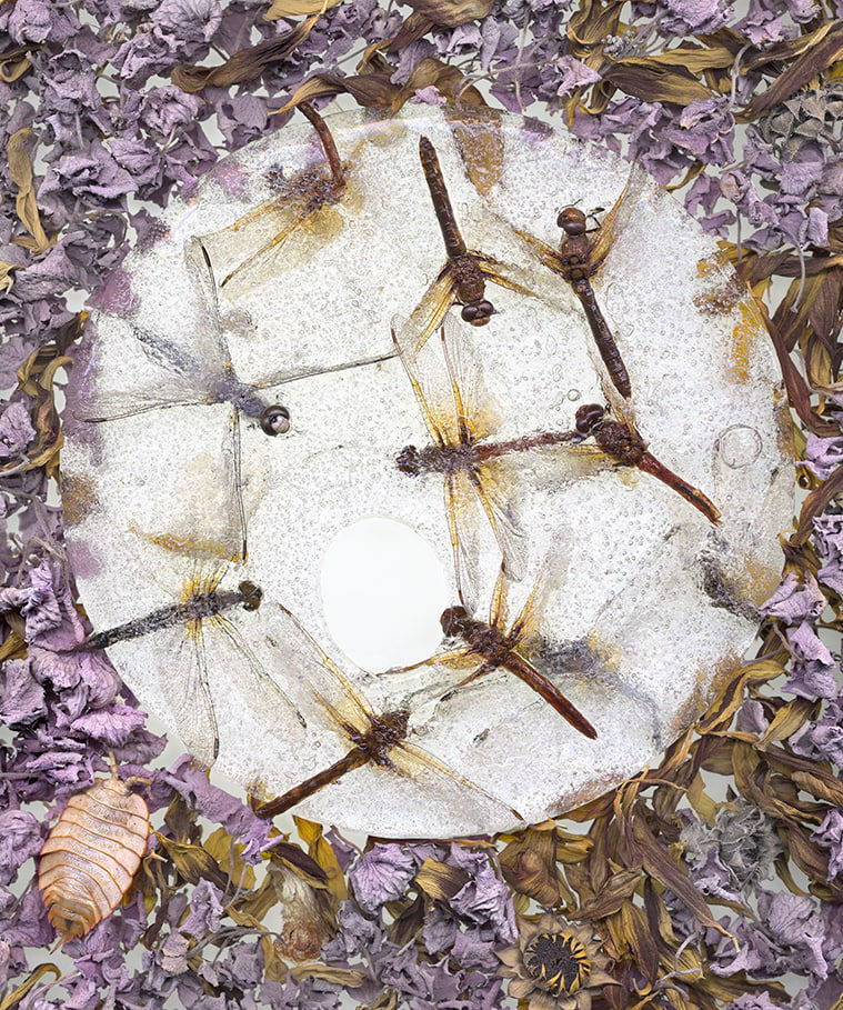 Janet Dwyer DragonFly_Circle_20x24
