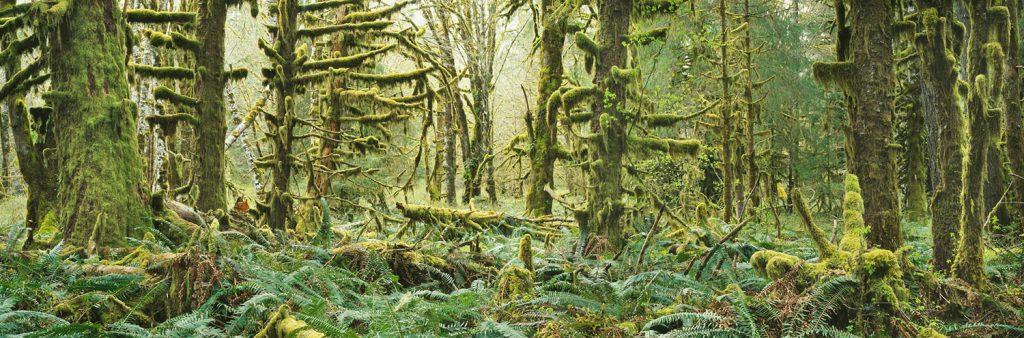 Steven Friedman Moss-and-Ferns-and-Maples