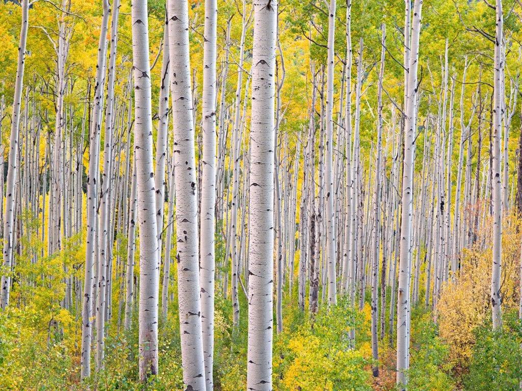 Steven Friedman - Radiant Dancing Forest