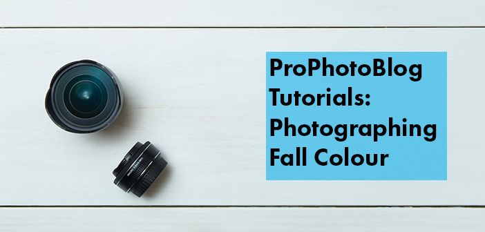 Vistek Tutorials - Photographing Fall Colour Cover