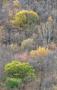 forest-brushes - Michael Reichmann