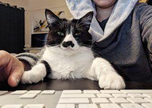 Unagi the cat