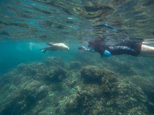 Beata Kacy Scuba Diving with Seal