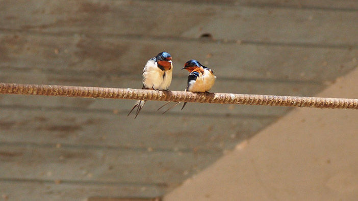 Birds sitting on rebar