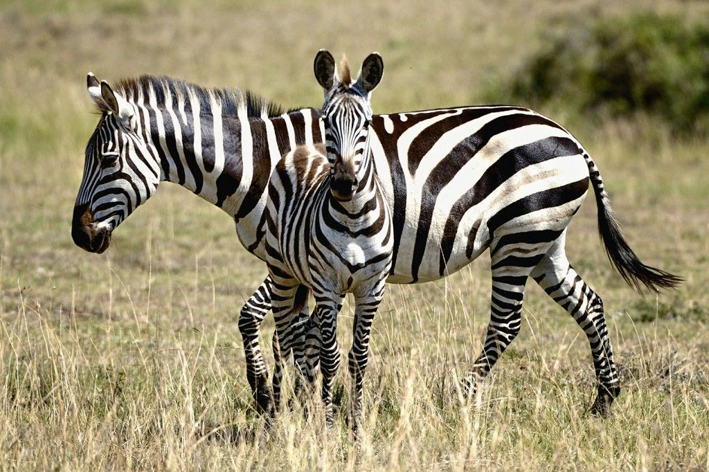 Pictures from the Mara day 1