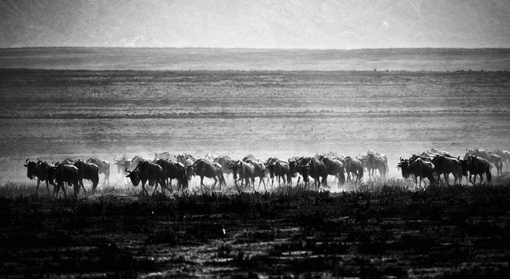 Day two of safari
