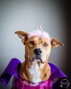 Dog by Marta Musa
