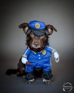 dog dressed as policeman
