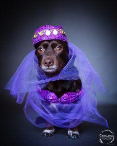 dog dressed in purple shroud