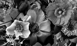 epson surecolor printers HD Ink Black & White