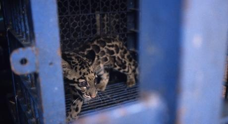 The online illegal pet trade