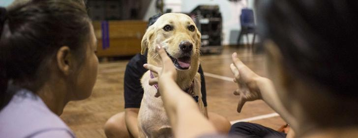 Why belly rubs can be the best therapy