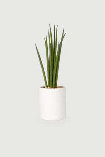 Slim Ceramic Planter 2946