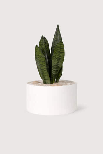 Wide Ceramic Planter 2947