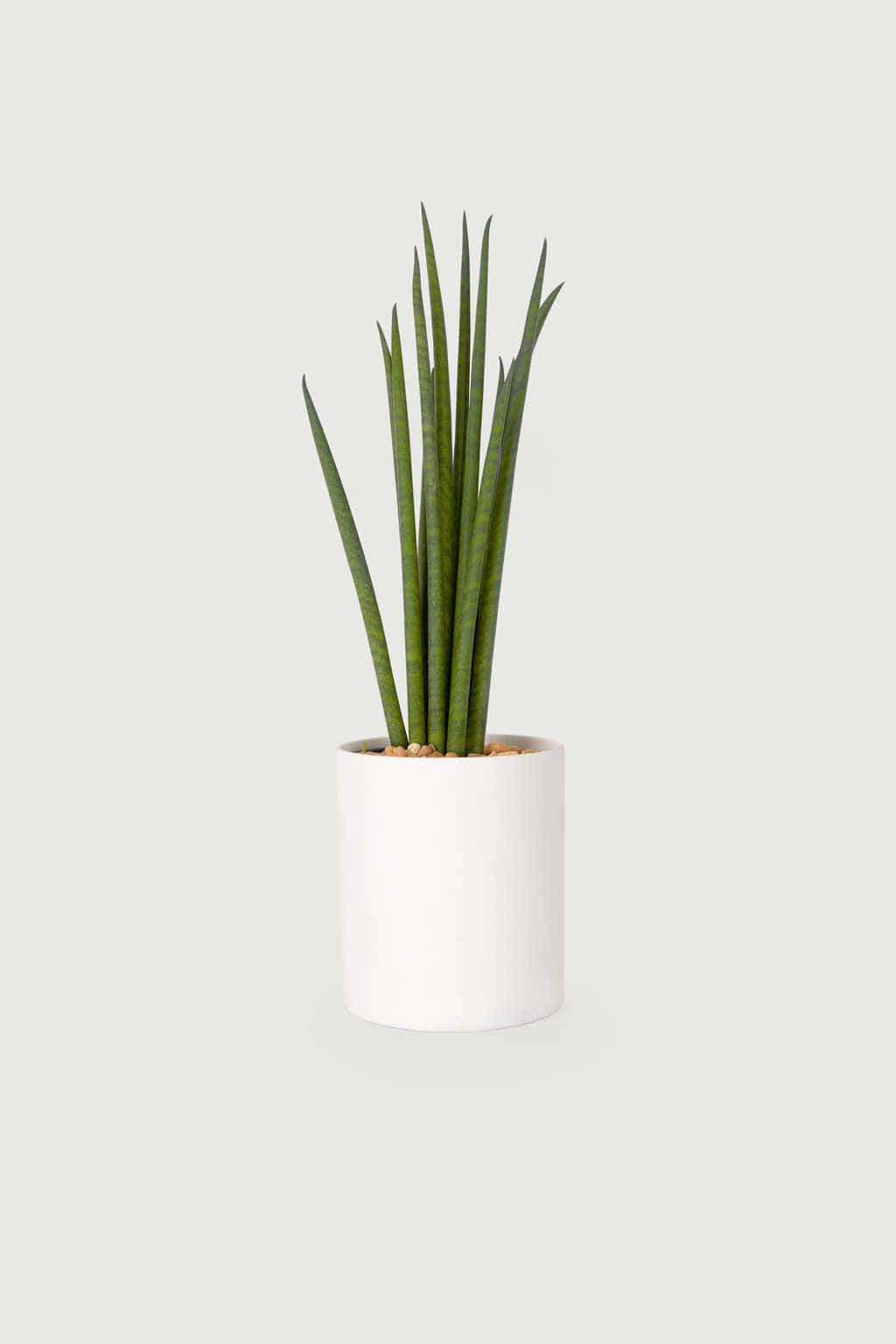 Slim Ceramic Planter 2946 White 1