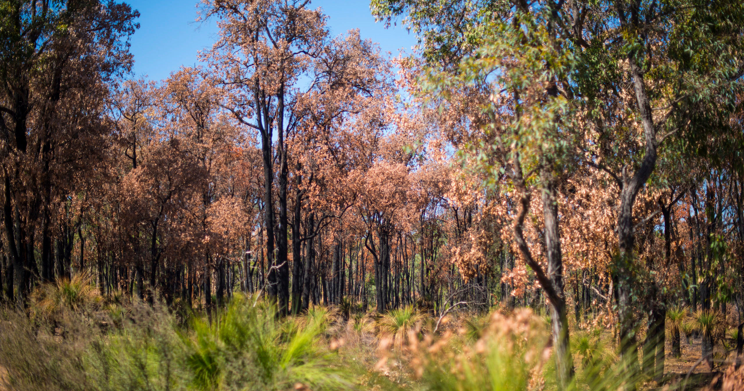 Lending a Helping Hand to Bushfire Victims