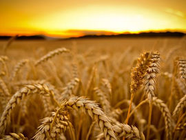 Celebrating Harvest and the Season of Creation