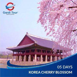 KOREA CHERRY BLOSSOM
