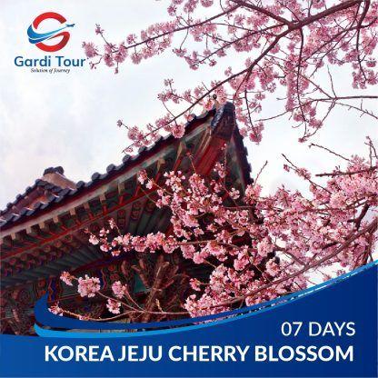 KOREA JEJU CHERRY BLOSSOM