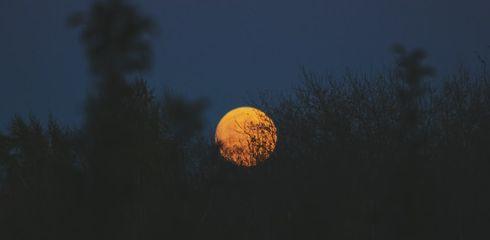 Jagen mit Nachtsichtgerät / Nachtsichkamera