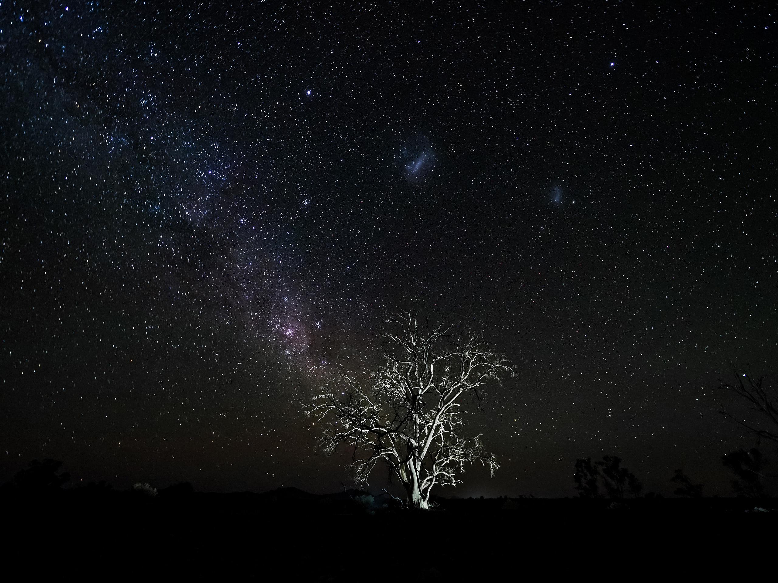 Tree lit up against starry night sky, photographed using Olympus OM-D E-M1 Mk III + M.Zuiko Digital ED 7-14mm f2.8 PRO lens