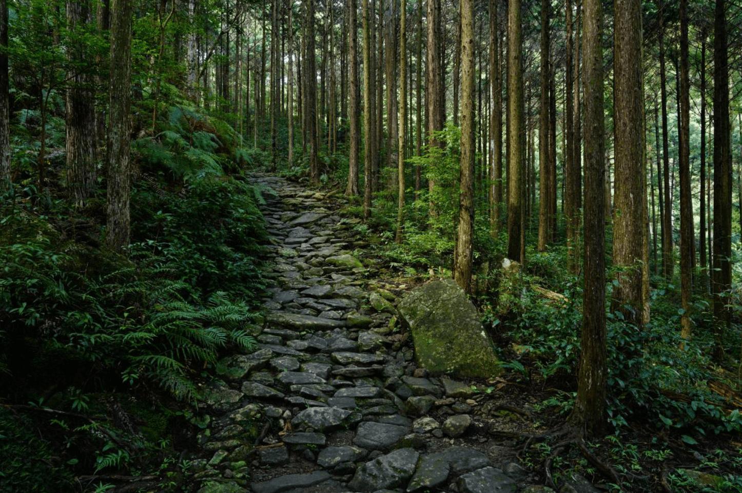 CameraPro Australia Sony FE 24-105mm f/4 G OSS Lens sample image forest