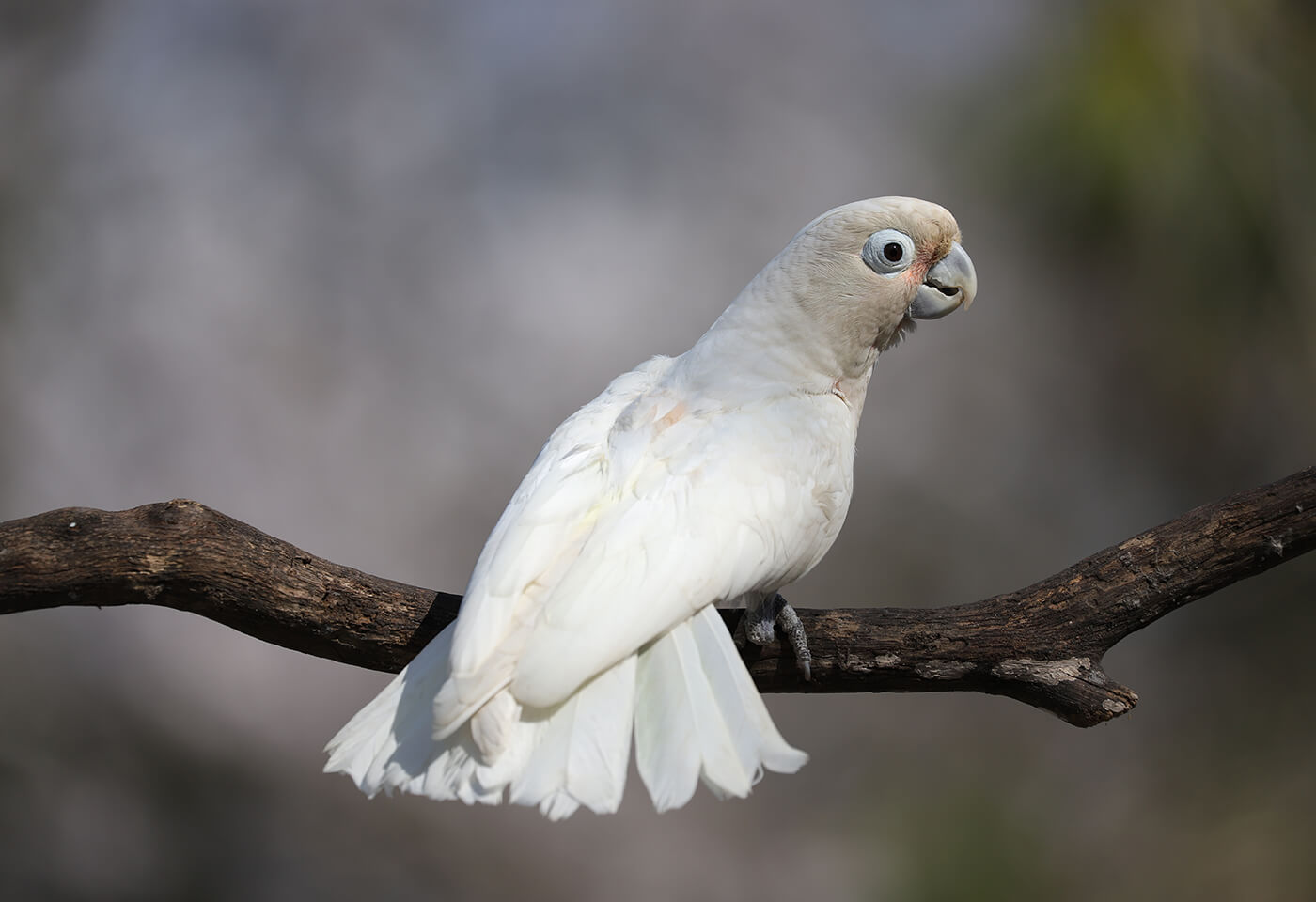 White bird perched on a tree branch, photographed with the Canon 6D Mark II DSLR camera