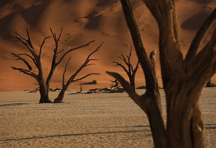 Dead trees in a stark desert landscape backdropped by tall sand dunes, photographed with the Canon RF 24-105mm f4 IS USM lens