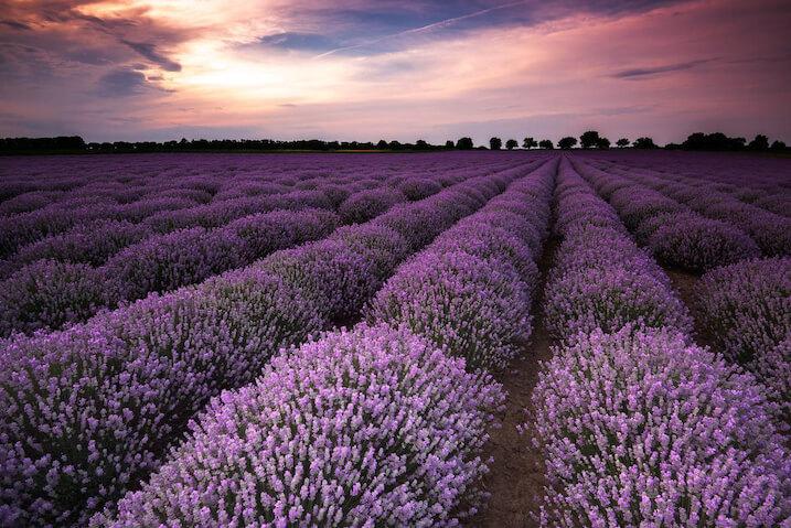 Field of lavander, taken with Nikon AF-S NIKKOR 16-35mm f4