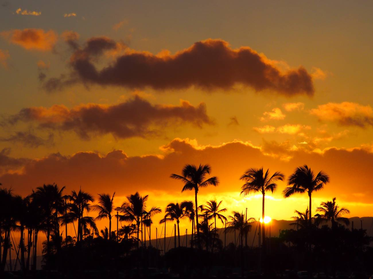 Palm trees silhouetted against a warm orange sunset, photographed with the Olympus 40-150mm f4-5.6 R lens