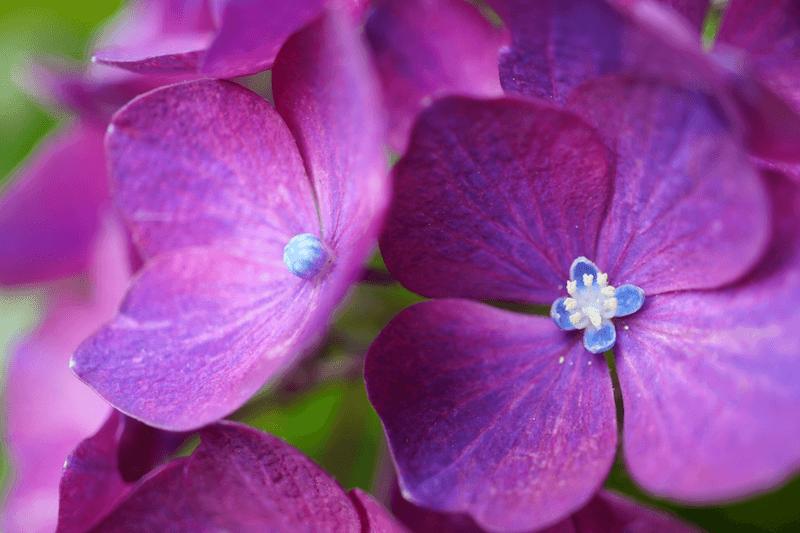 Purple flowers, taken using the Sony 30mm f3.5