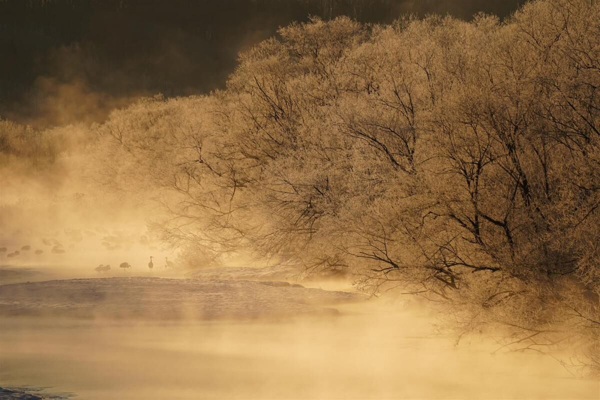 Steam coming off icy lake with trees in foreground & birds in background, shot with Sony FE 100-400mm f/4.5-5.6 GM OSS lens