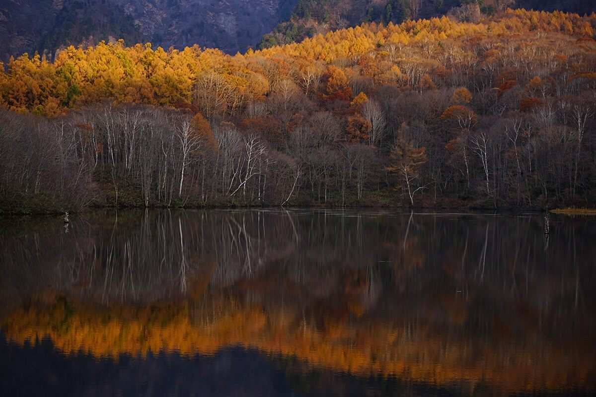 Dense forest of yellow-leafed trees mirrored in water, photographed with the Sony FE 28-70mm f/3.5-5.6 OSS lens