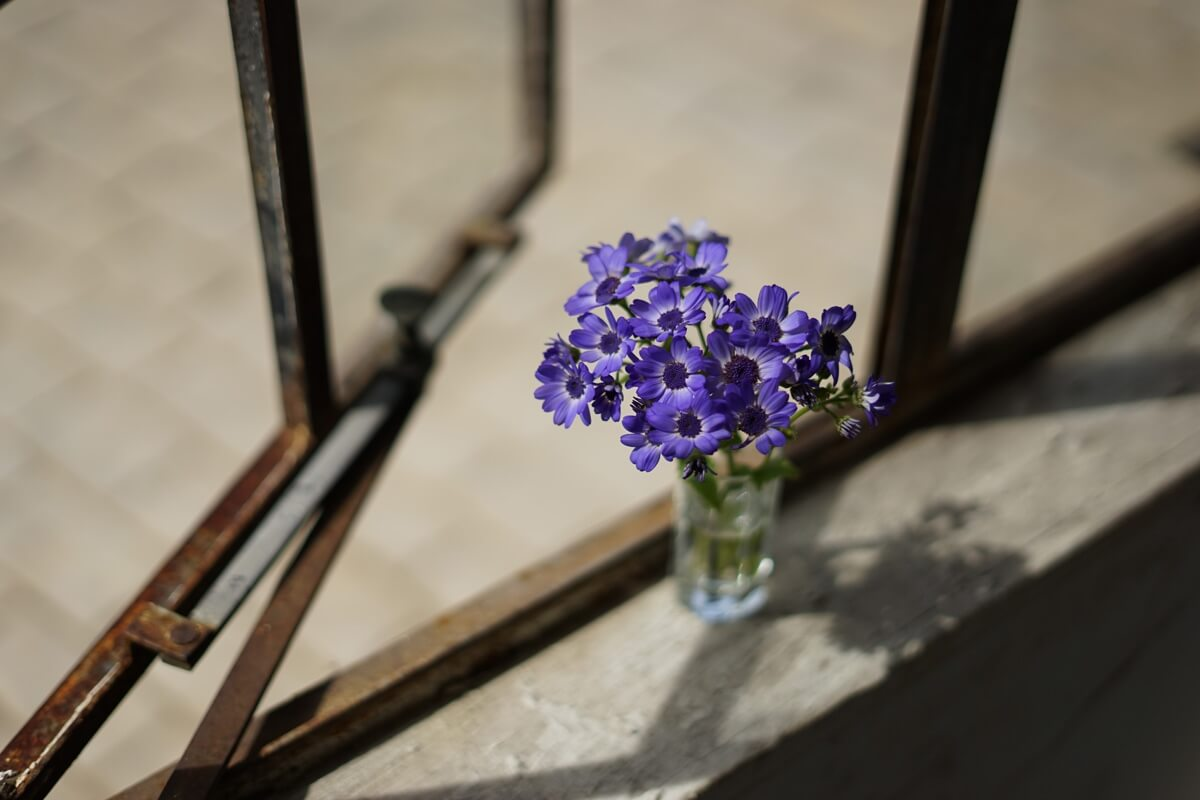Vase of blue-purple flowers sitting on the sill of a rusty, partly open window – photographed with the Sony 50mm f1.8 lens