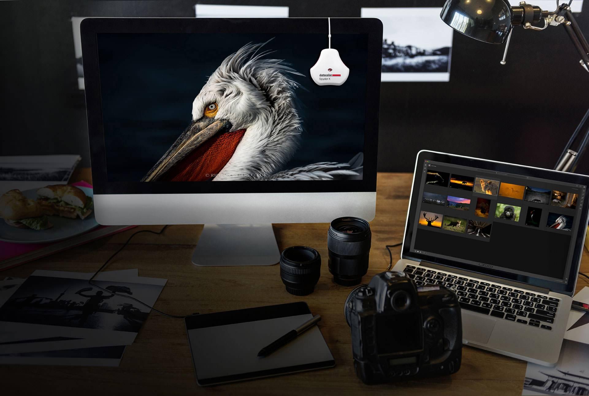 calibrating an image of a bird shown in a desktop computer