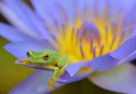 close up shot of a frog sitting on a flower
