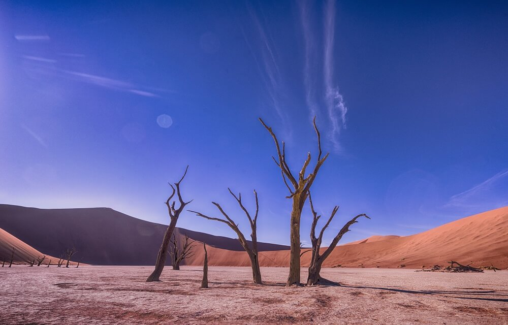 Dead trees in the middle of a desert