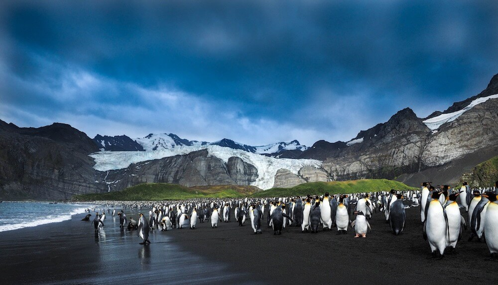 Penguins by the beach