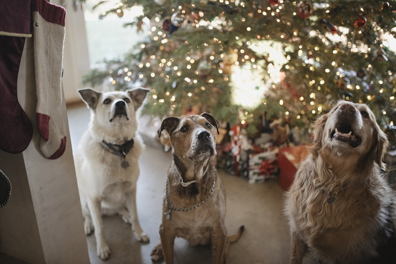 three dogs waiting under the christmass tree