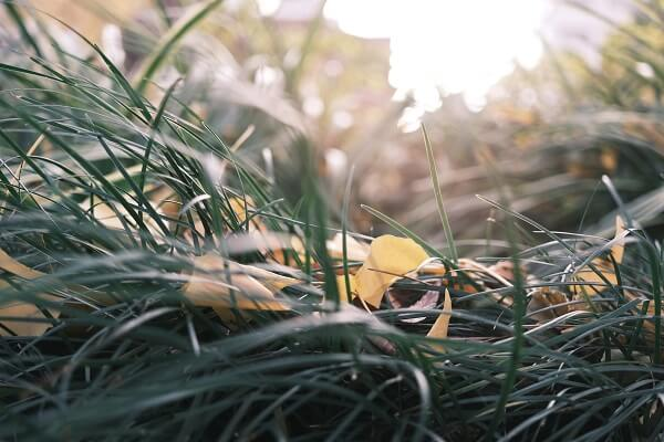 Close-up of yellow leaves among plates of green grass, photographed with the Fujifilm X-E4