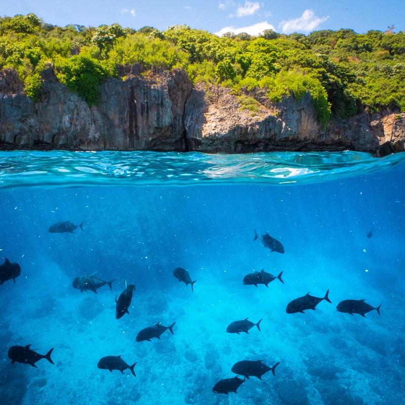 marine life in christmas island