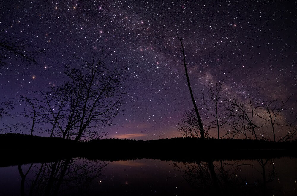 Silhouette of trees with the milky way in the background
