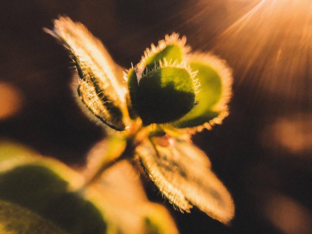 leaves macro photography