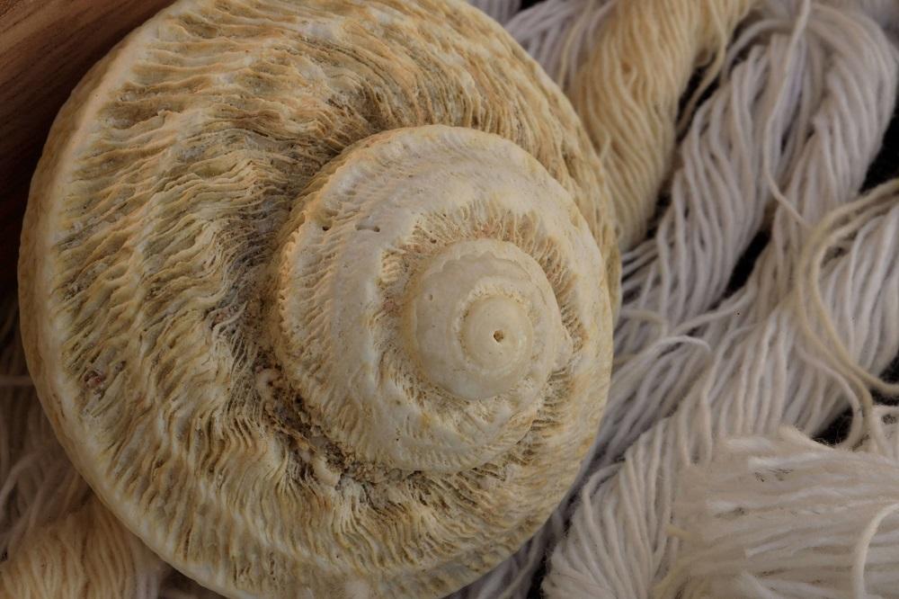 shell macro photography