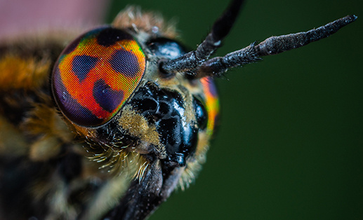 macro shot of a bug's compound eyes
