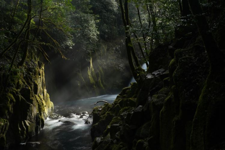 Water and rays of light between mossy, tree-covered riverbanks, photographed with the Sony FE 50mm f1.2 GM lens