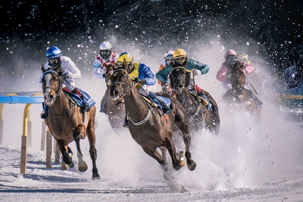 a sports photography shot of a horse race on snow