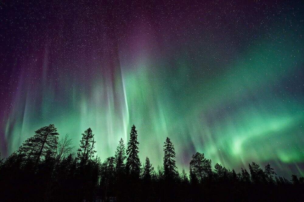 Aurora borealis on top of trees
