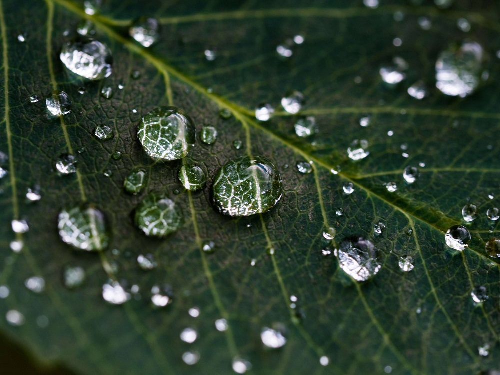 water droplets on leaf macro photography