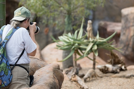 wildlife photographer in a zoo